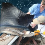 Have you ever seen a swordfish this big?