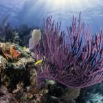 Key Largo Coral Reef